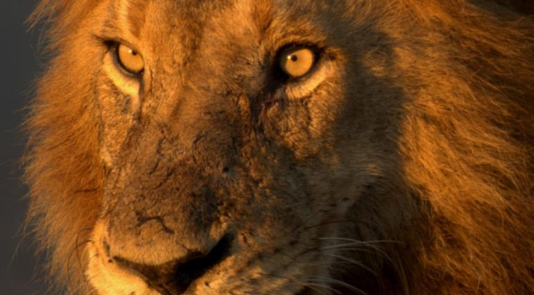 South Africa, KNP and VF Tour Package - PKT Tours USA, Inc