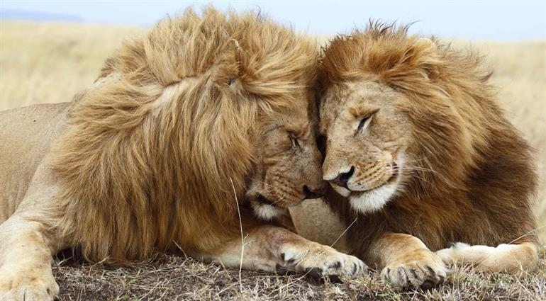 Kenya, South Africa and VF Peak Tour Package - PKT Tours USA, Inc